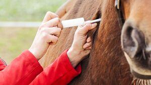 CAV Spritzen Angst Tierartzt