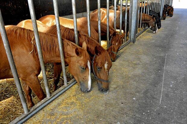 CAV Stall Hof Kleemeyer 2