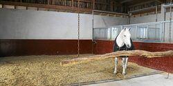 CAV Stall Scout 05_2015 Hofgut Ashege 2