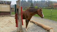 CAV Stall Scout 07_2014 Horse Paradise 4