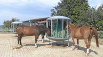 CAV Stall Scout 10_2014 Reiterhof Pavel 3