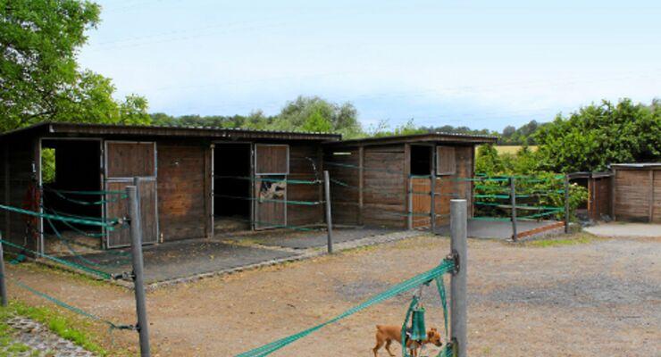 CAV Stall-Scout Stall-Runde EquiArt Corinna Hengefeld Brightcove