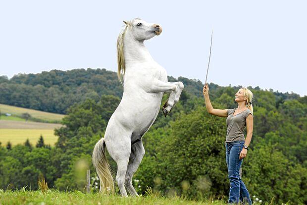 CAV-Standpunkt-Horsemanship-2 (jpg)