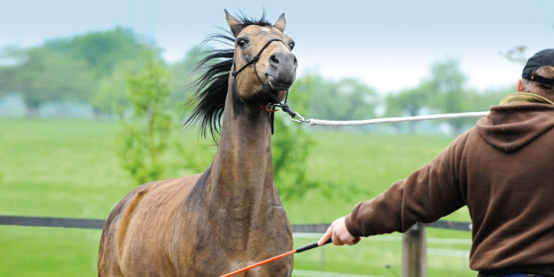 CAV-Standpunkt-Horsemanship-3 (jpg)