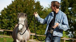 CAV Stimmung Horsemanship Florian Oberparleiter 1