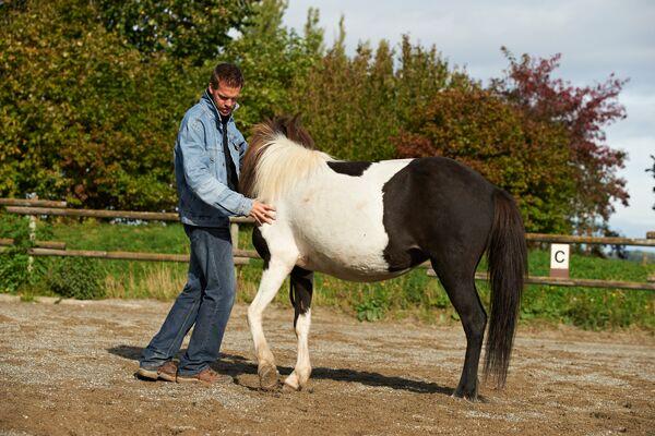 CAV Stimmung Horsemanship Florian Oberparleiter 5