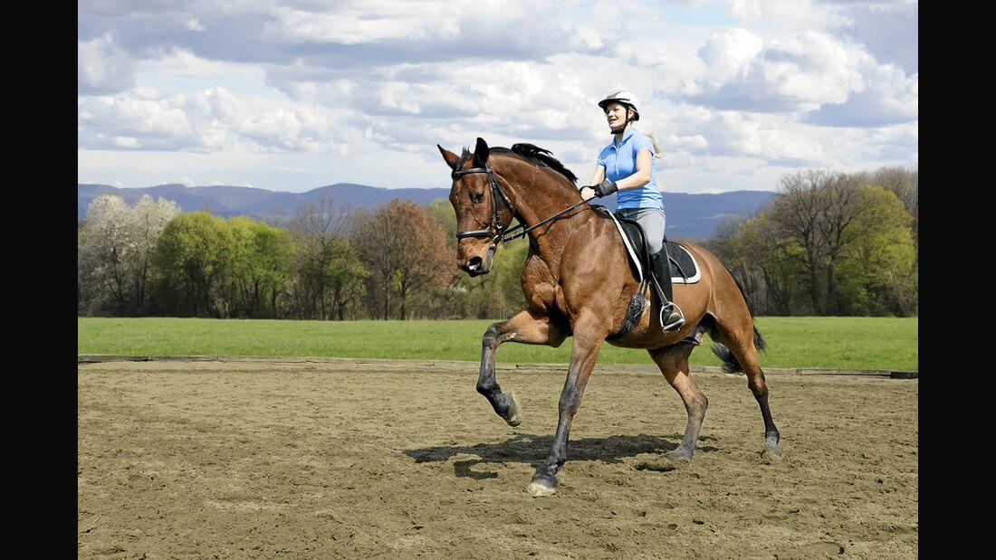 CAV Stimmung Pferd steuern 1