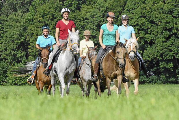 CAV Stimmung Pferd steuern 3