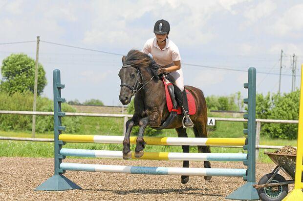 CAV Stimmung Pferd steuern 5