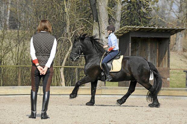 CAV Stimmung Pferd steuern 7