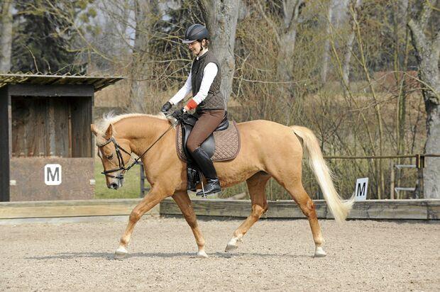 CAV Stimmung Pferd steuern 8