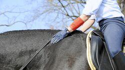 CAV Stimmung Pferd steuern 9