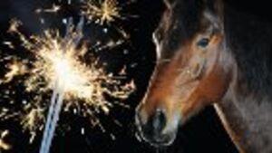 CAV Sylvester Feuerwerk Neujahr 42_Teaser