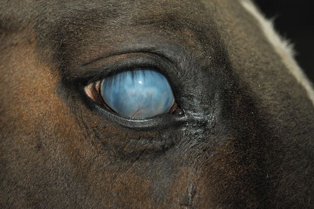 CAV Symptom-Lexikon - Glaukom