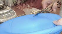 CAV Test Schadstoffe Plastikspielball Pferd2