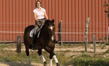 CAV Tietze Dressur Coach Video 07 - Absprachen mit Deinem Pferd