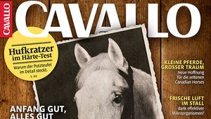 CAV Titel Cover Februar 2019