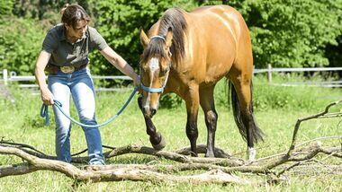 CAV Trail Pferd an der Hand über Baumstämme