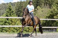 CAV Training Pferd Außenplatz