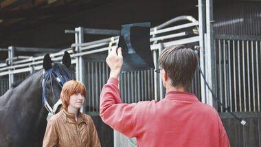 CAV Umfrage Pferdeärzte Ergebnisse