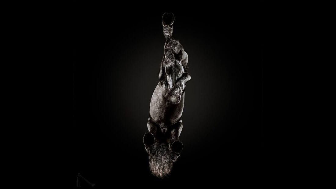 CAV Under Horses Underlook Andrius Burba Nase zuhalten