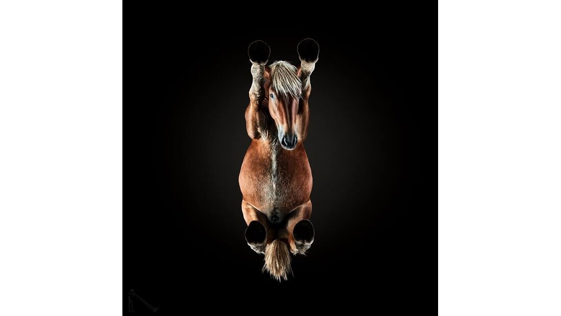 CAV Under Horses Underlook Andrius Burba Stretching