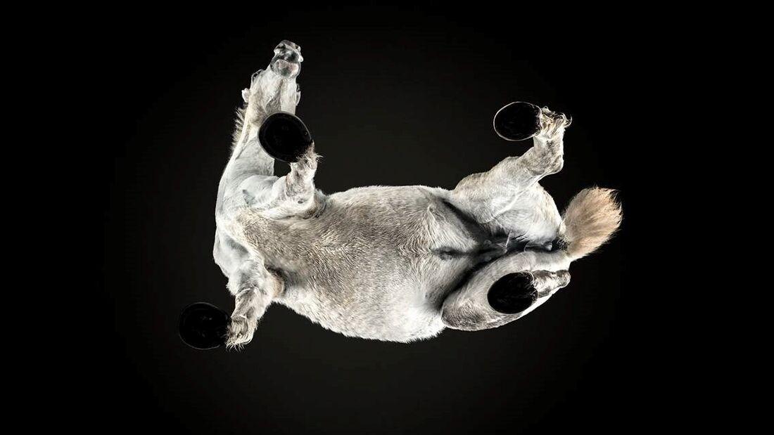 CAV Under Horses Underlook Andrius Burba auf allen vieren