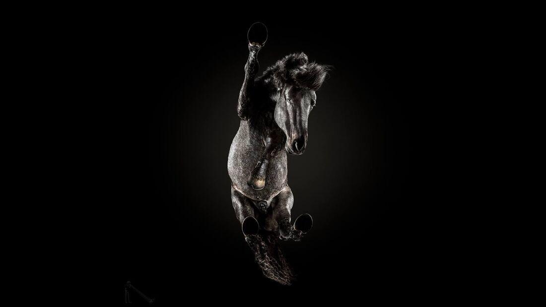 CAV Under Horses Underlook Andrius Burba nach unten geschaut