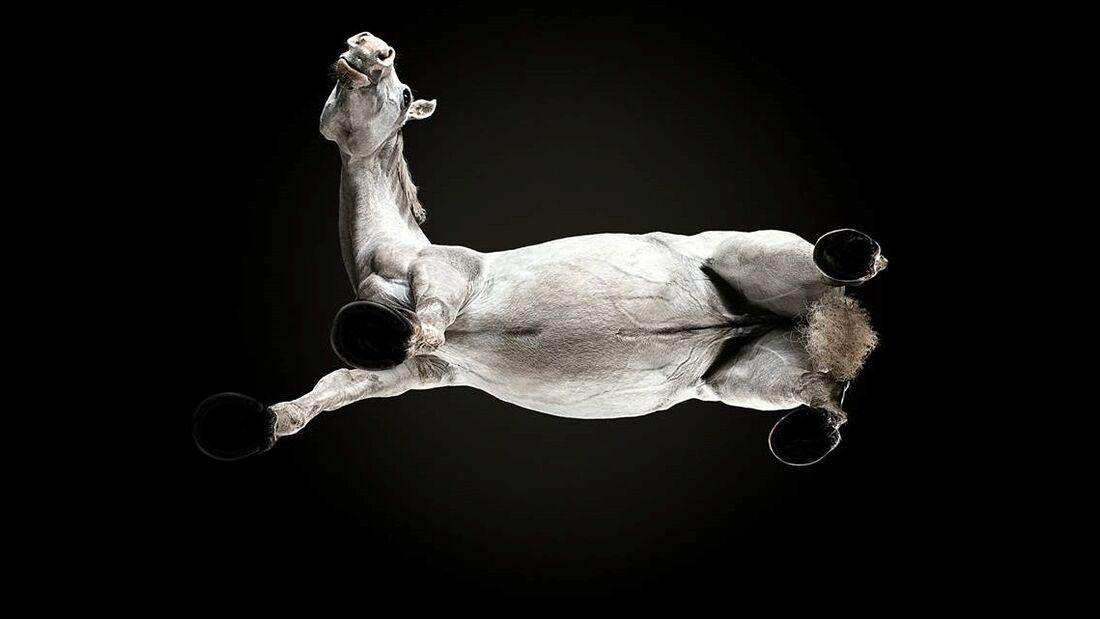CAV Under Horses Underlook Andrius Burba weiß auf schwarz