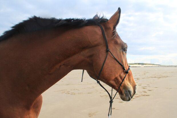 CAV Urlaub mit Pferden Leserfotos Anja Felten