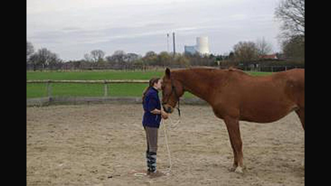 CAV Valentinstag Horselovers 1