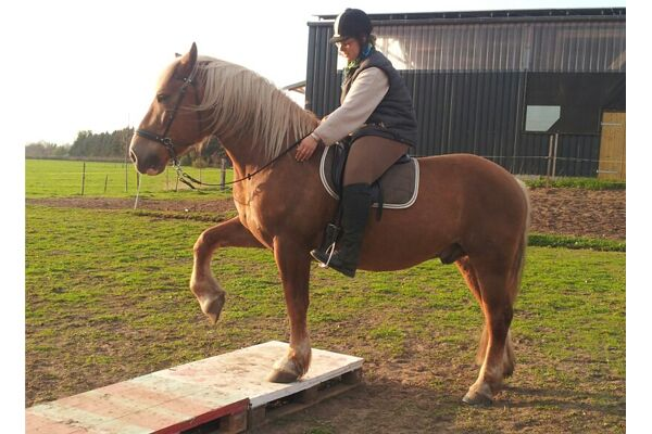 CAV Verfressene Pferde 10