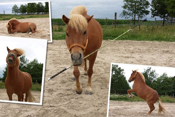 CAV Verfressene Pferde 13 Leserfoto