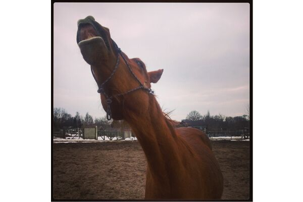 CAV Verfressene Pferde 3