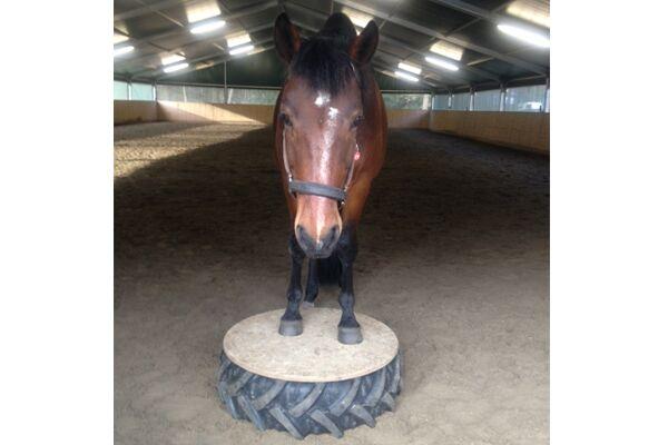 CAV Verfressene Pferde 4