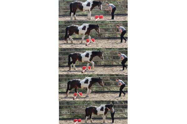 CAV Verfressene Pferde 5