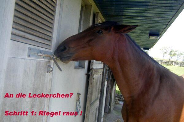 CAV Verfressene Pferde 6