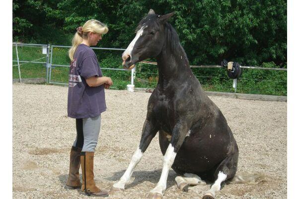 CAV Verfressene Pferde 8