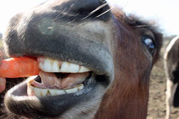 CAV Verfressene Pferde 9