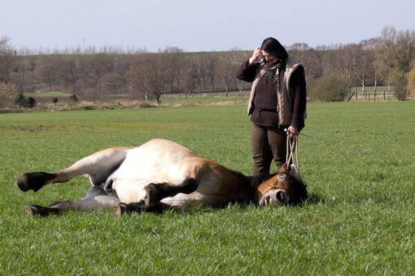 CAV Verfressene Pferde Leserfotos 19