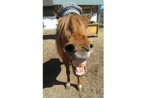 CAV Verfressene Pferde Leserfotos 21