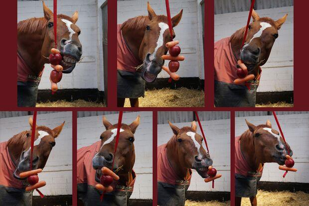 CAV Verfressene Pferde Sandra Kortstiege