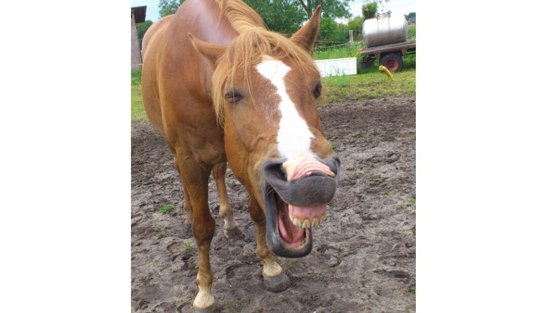 CAV Verrückte Pferde 2012 - Elcorado 3