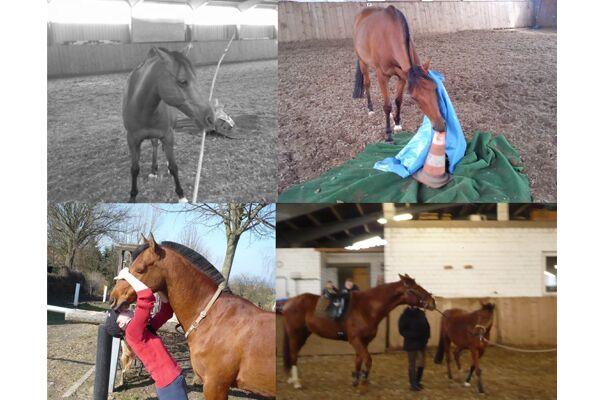 CAV Verrückte Pferde 2012 - Enjoy 1