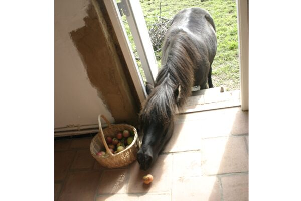 CAV Verrückte Pferde 2012 - Othello 2