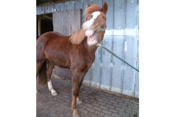 CAV Verrückte Pferde 2012 - Pubs 5
