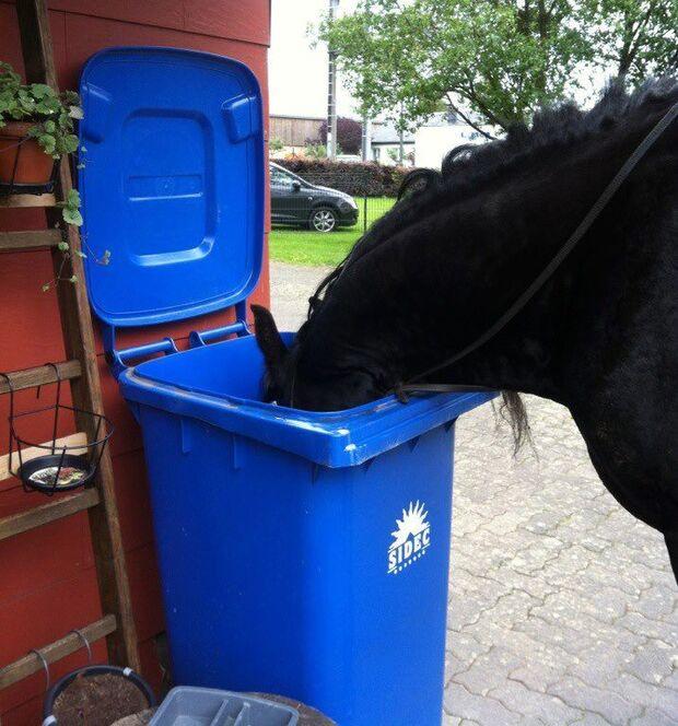 CAV Verrückte Ticks Marotten Pferde 2012