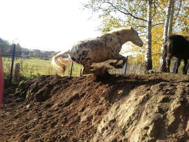 CAV Verrückte Ticks Marotten Pferde