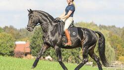 CAV Versammeltes Pferd