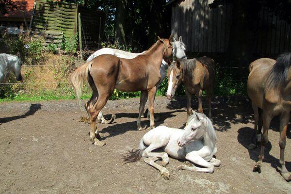 CAV Verwahrloste Pferde 1